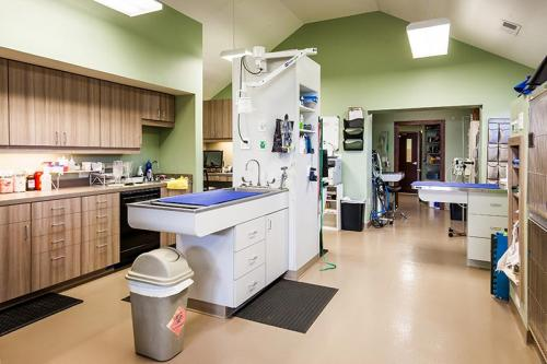HardinValleyAnimalHospital Interior-Treatment-Area-1-and-Office-2